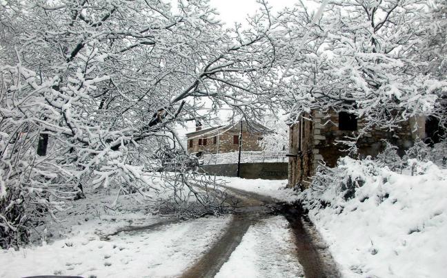 Elatoxori with snow