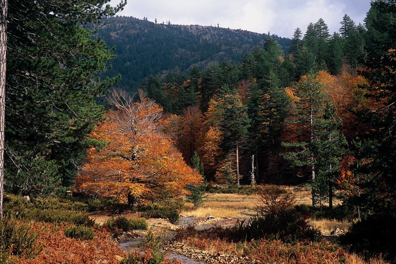 Grevena Pindos National Park (Valia Calda)1