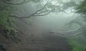 Forest of Mainalon.